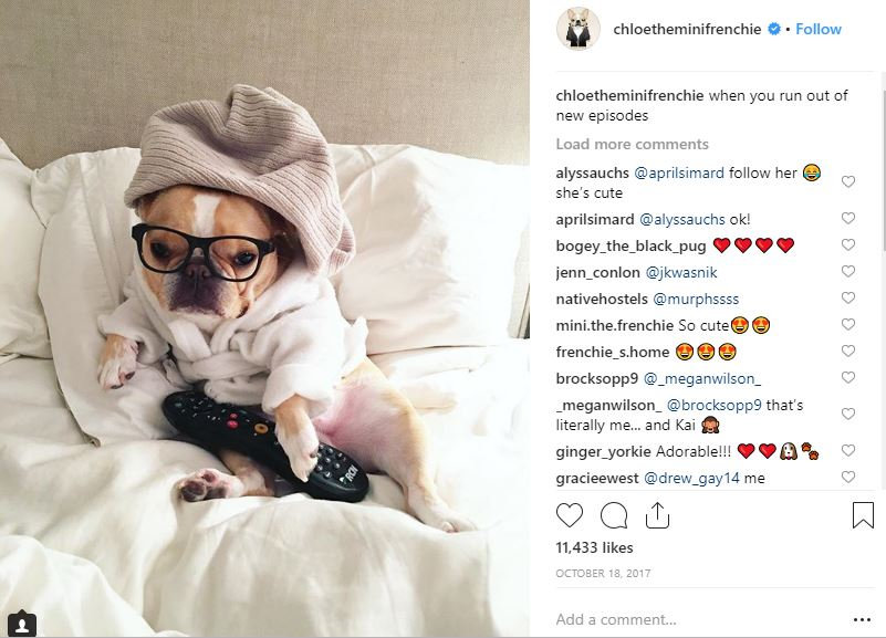 "Loni Edwards, entrepreneur and fur-mama to the late Chloe The Mini-Frenchie, said the most ""insta-famous"" animals have great photos, clever copy and an ""Oh my God"" grab (either cute or shocking) that makes people want to share."