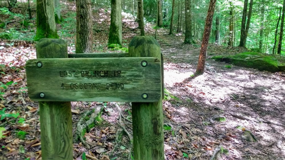 Sign for Lost Branch Trail at junction with Sheltowee Trace