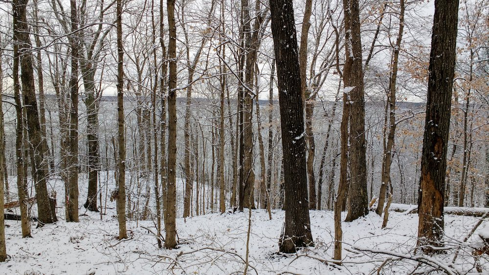 A snowy day at Land Between the Lakes Trail Races