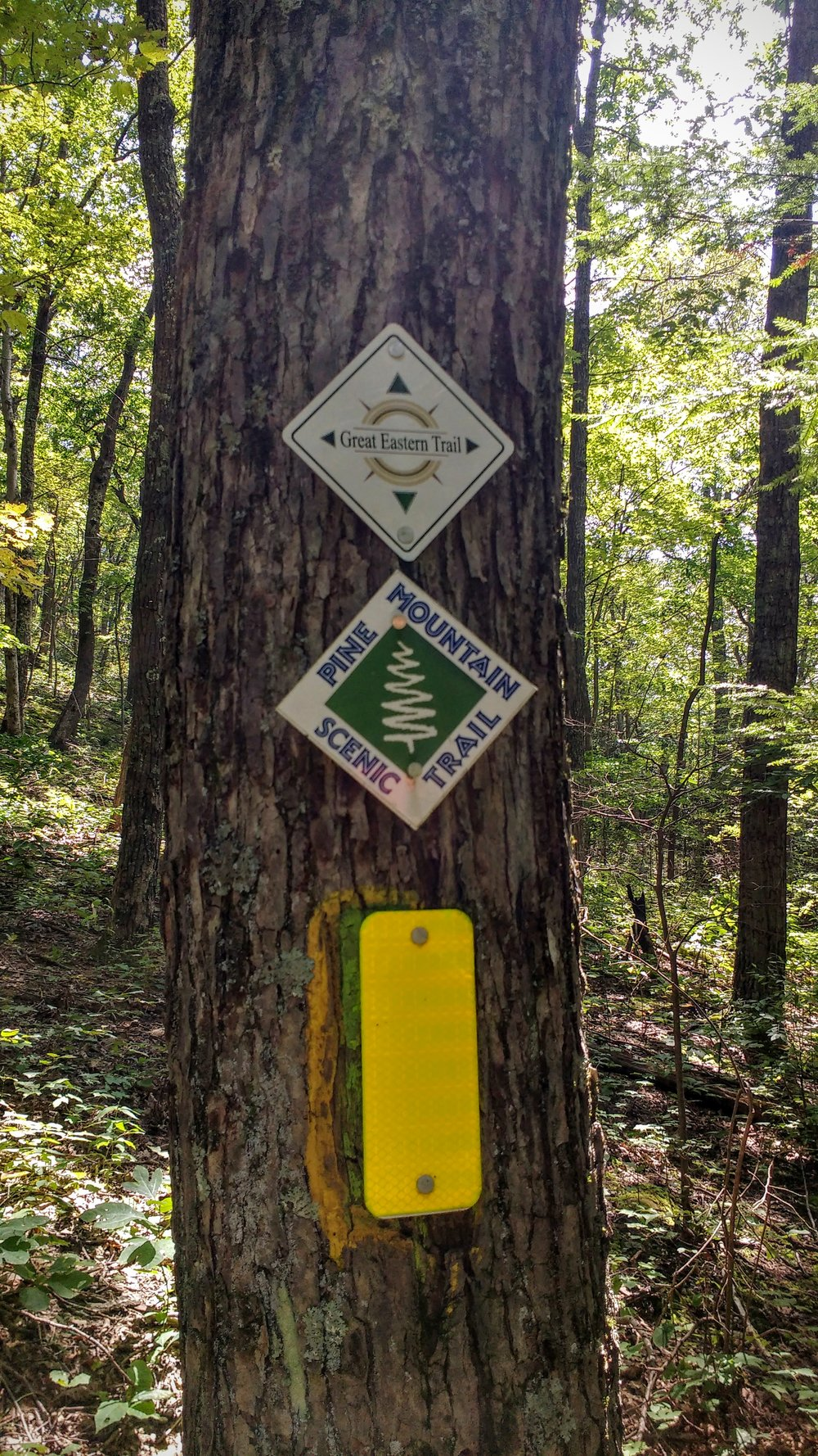 Three blazes mark the Pine Mountain Trail - old yellow blazes, new PMT blazes, and GET blazes