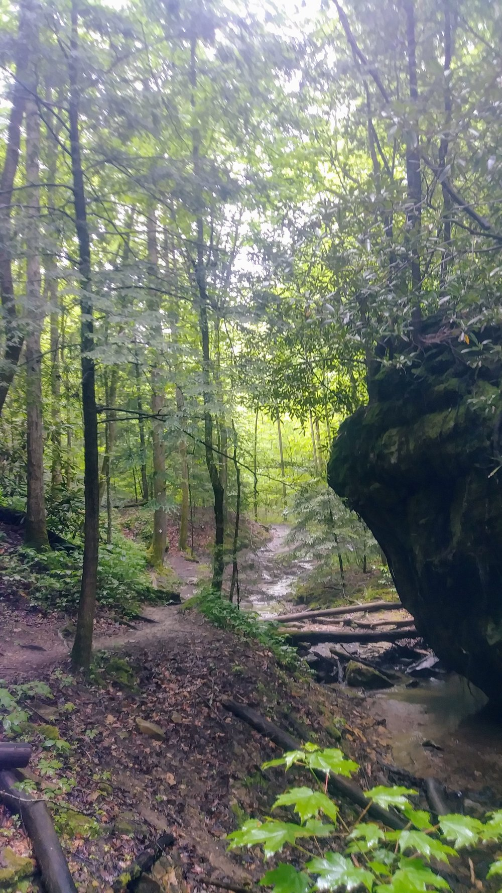 Looking up a beautiful creek from Rough Trail at Red River Gorge