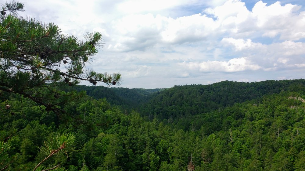 A beautiful vista just past Whistling Arch in Red River Gorge