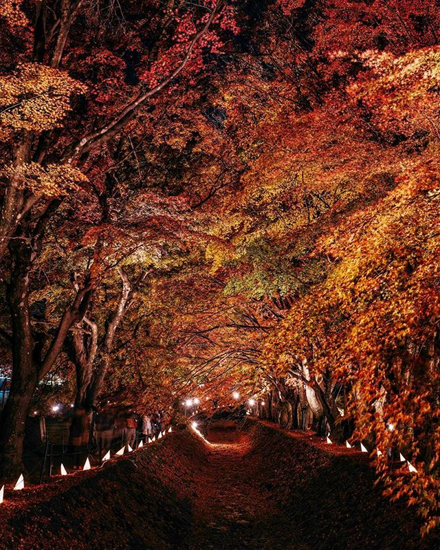 Autumn overload at #kawaguchiko.