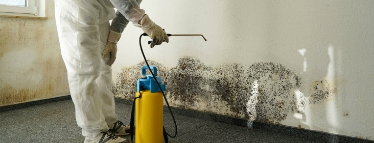 mold-remediation-specialist-chicago.jpg
