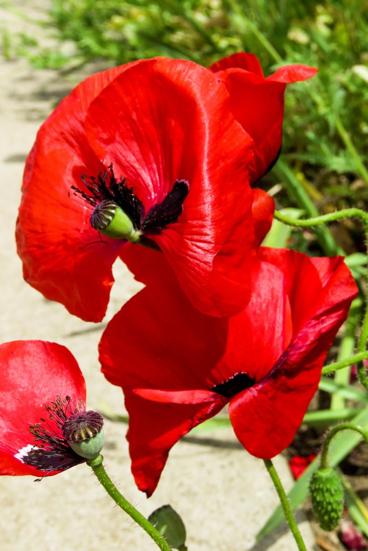 The Centenary of Armistice Day -