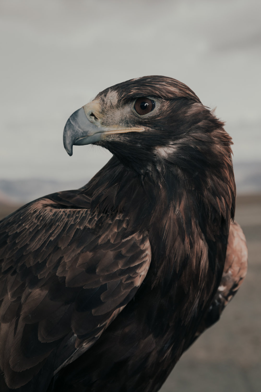 Eagle_portrait.jpg