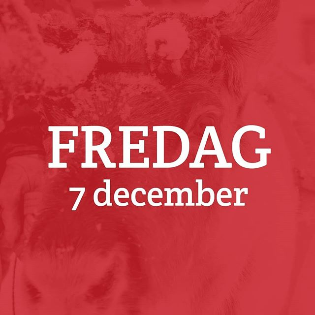 I dag är det fredag gott folk! #thankgoditsfriday, och allt det där. Men det är inte vilken bierjjedahka som helst — det är julmarknadsfredag! I dag tjuvstartar vi festen med julshopping i butikerna, minneskonsert för Paulus Utsi, boksläpp med Anna Kuhmunen och Leila Nutti, och avslutningsvis ett Midvinterblot hos ViddernasGasskas. Det här kommer bli så kul! 🎄 Se programmet i sin helhet på www.jokkmokksjulmarknad.se, eller i vår bio. Butikerna håller öppet 10.00-18.00, om inget annat anges. 🎄 #jokkmokksjulmarknad#jul#jokkmokk#julmarknad#norrbotten#sápmi #jåhkåmåhkke#julshopping#duodji #julklappar #vinter#snö#julbord#julmarknader#jokkmokksjulmarknad2018 #tomten #julstämningpårikt