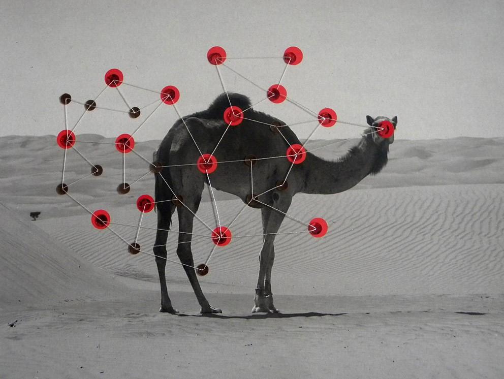 Untitled (Camel)