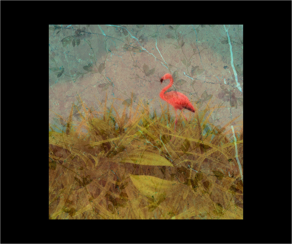 Flamingo copy.jpg