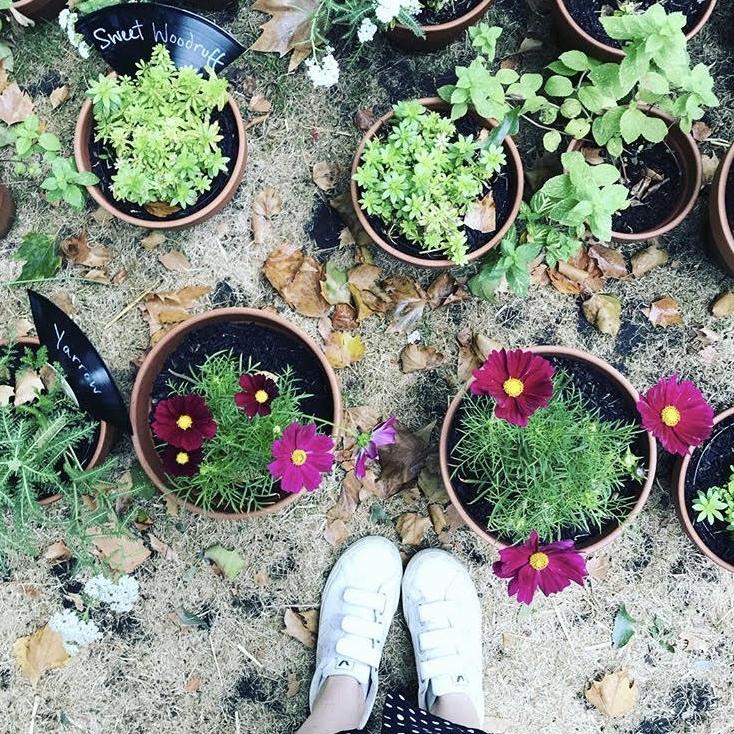 gardening - September growing tips