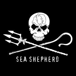 Jolly Roger Logo_sm.png