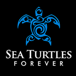 stf_turtle square-website.png