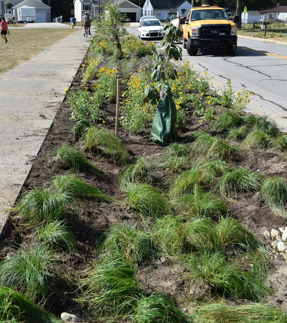 Freshly planted curb cut bioswale collecting, filtering, and storing stormwater runoff as well as preventing street flooding. This bioswale was a part of the Great Lakes Restoration Initiative, learn more at  www.LGROW.org/glri