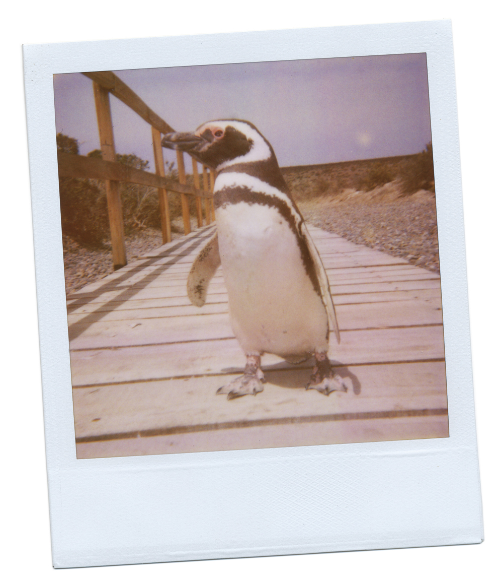 JBP_Polaroid-0016.jpg