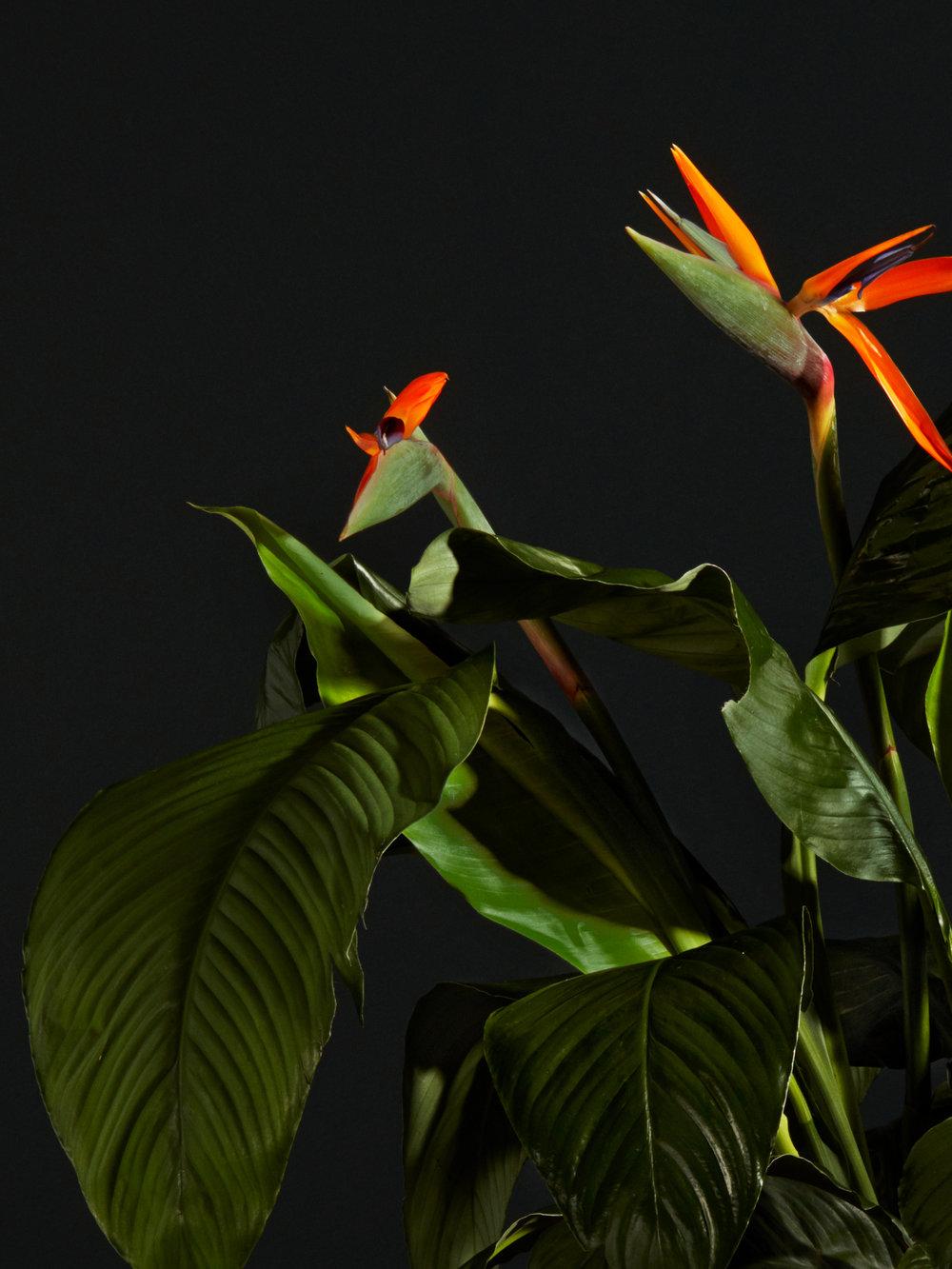 connect everyone through botanic herbs -