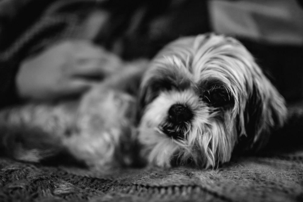 Emily and Ace, Puppy, Dog, Travel, Saint Paul, Minneapolis, Minnesota, Destination Wedding Photographer