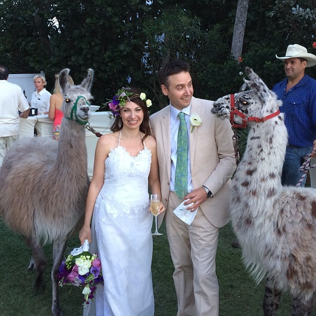 Llamas at Wedding--Cute -