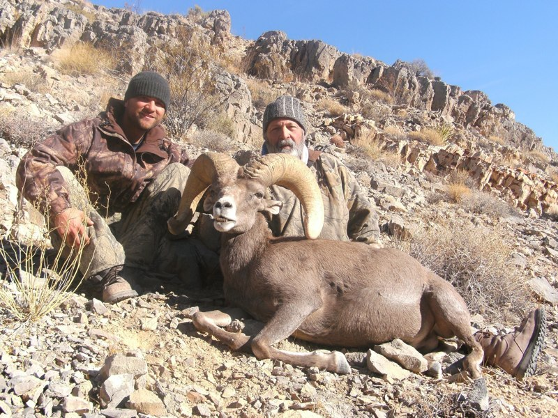 Larry Digesti 2009 Desert Sheep_1.jpg
