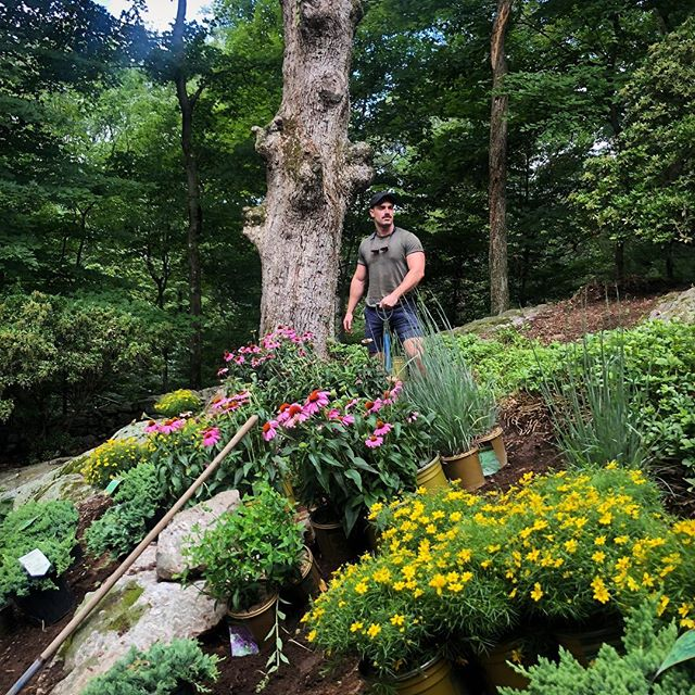 Hillside gardening 🌿🌷🌸🌺