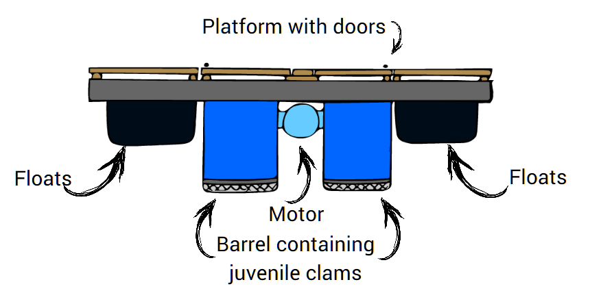 This shows what a FLUPSY unit looks like viewed from the side. The platform is supported by floats on either side. In the middle of the platform is the trunk line which contains the motor. The barrels that hold the shellfish are connected to the trunk line with additional supports.