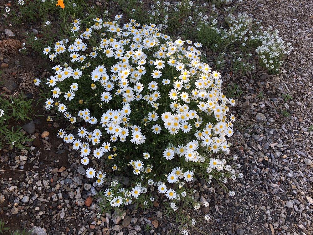 swcgflowers9.JPG