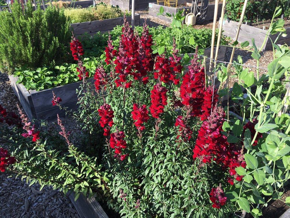 swcgflowers11.JPG