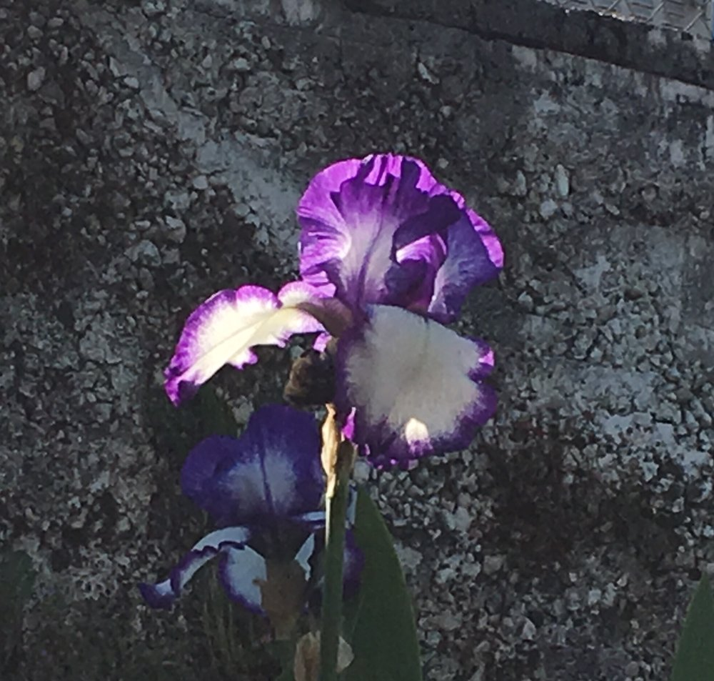 swcgflowers4.JPG