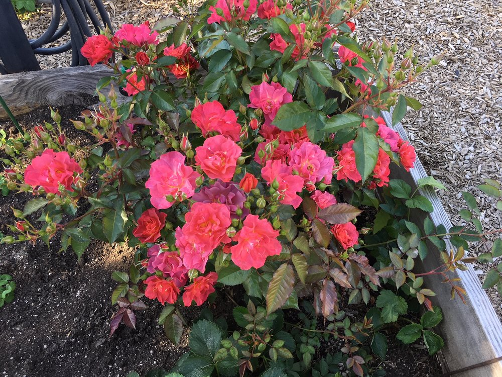 swcgflowers3.JPG