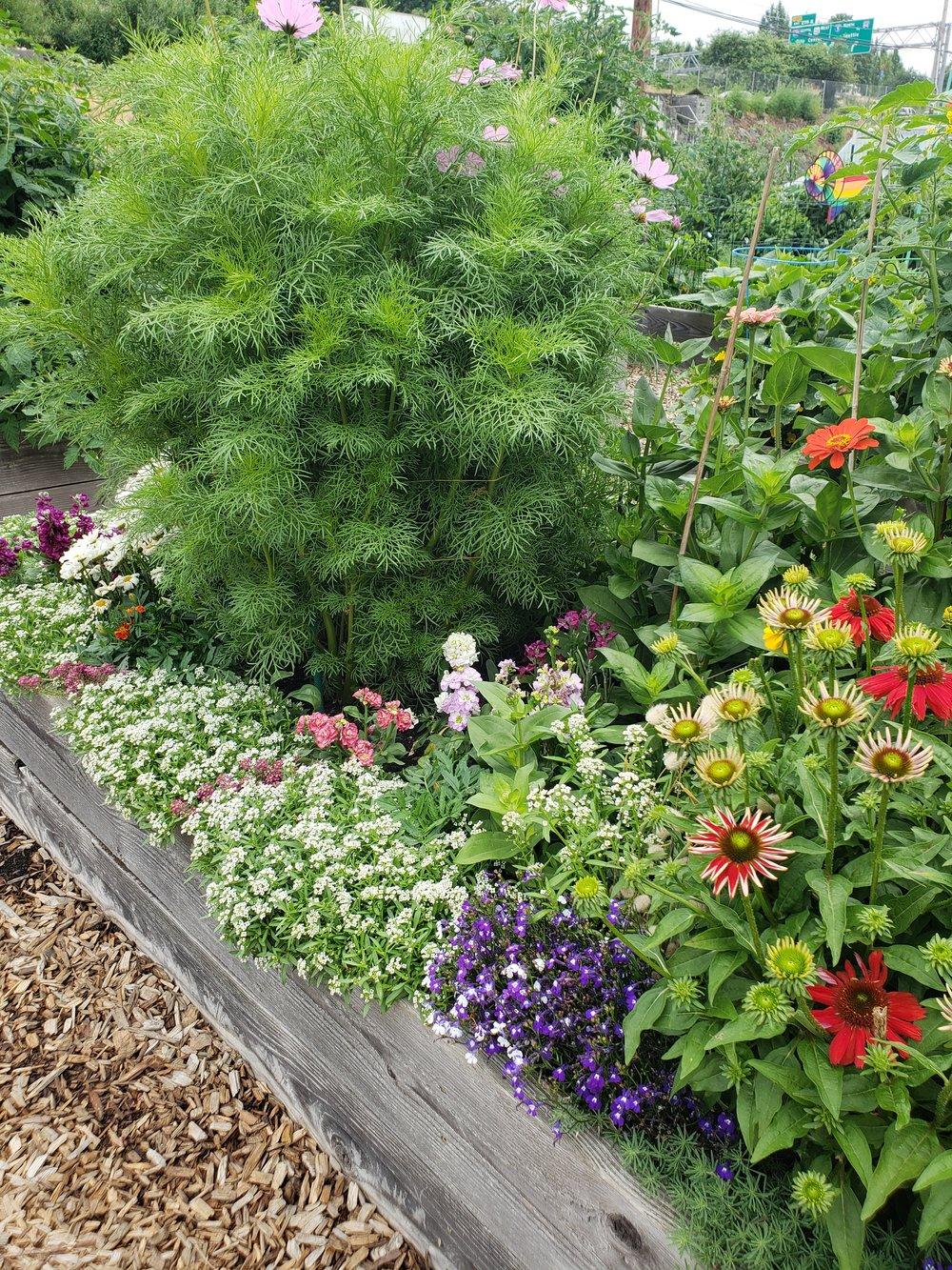 Community Garden Photo 2.jpg