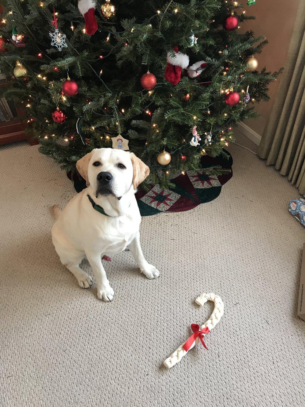 Emmett Christmas 2017