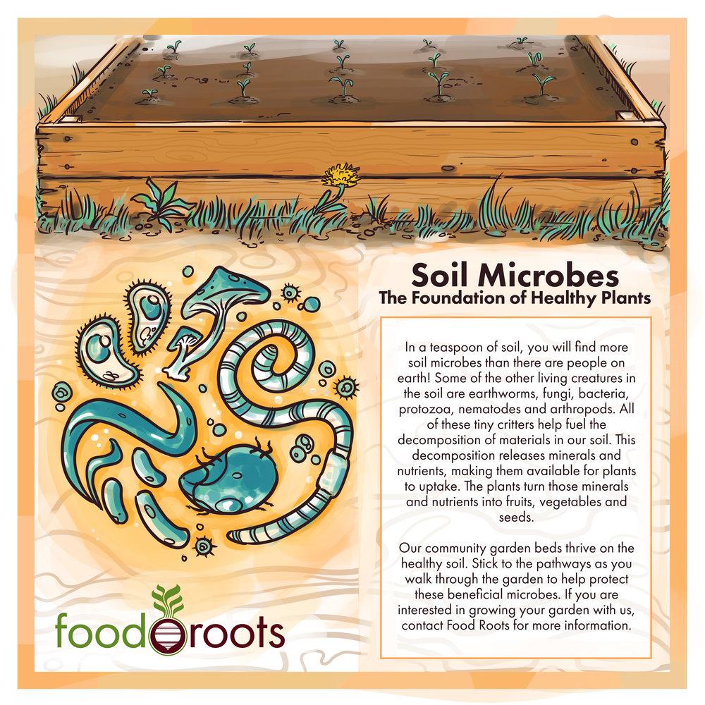 soil-critters-03.jpg