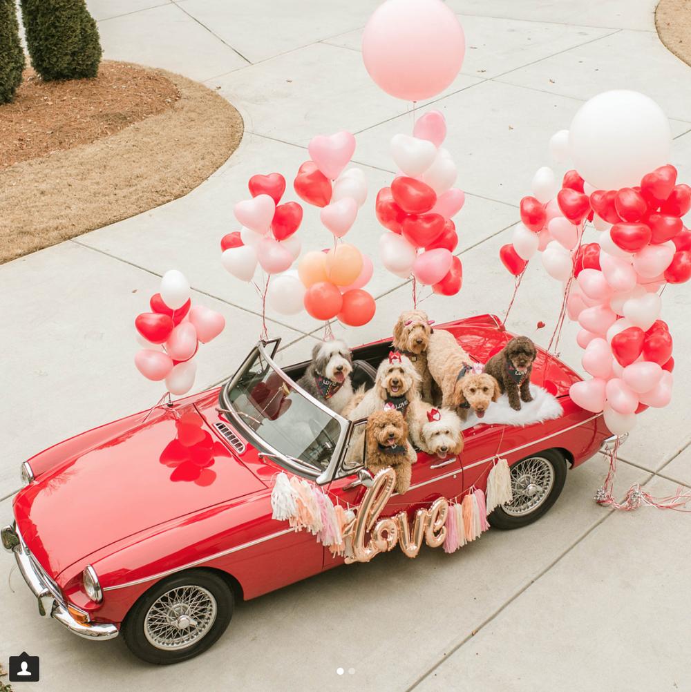 #rollinwiththedoodles hundar med hjärtballonger