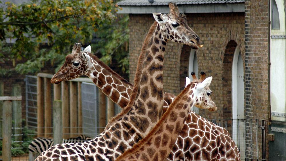Bild: London Zoo