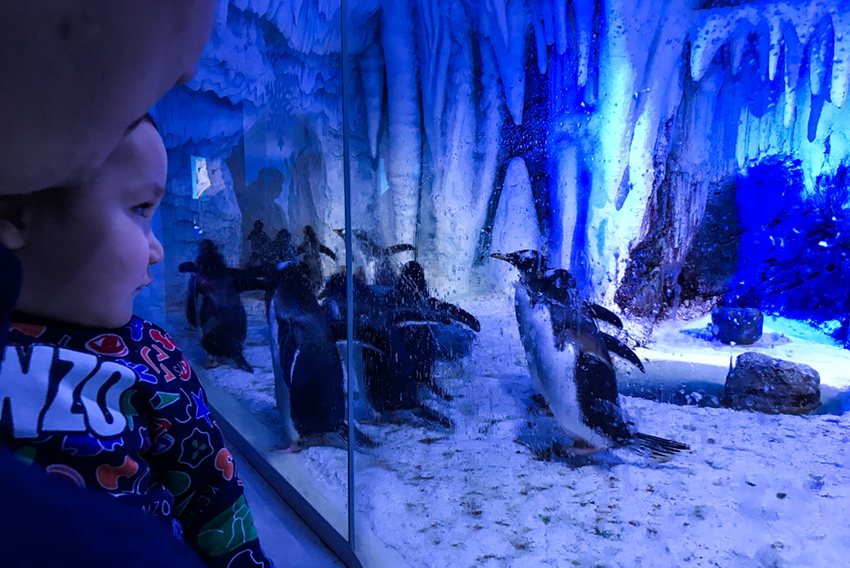 Det bästa på London Sea Life Aquarium de urgulliga pingvinerna!