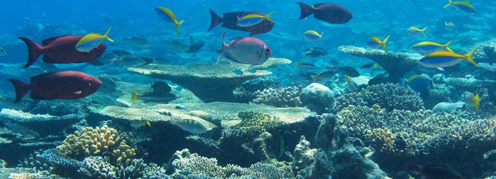 maldives-wildlife-holidays-marine-biology-header.jpg