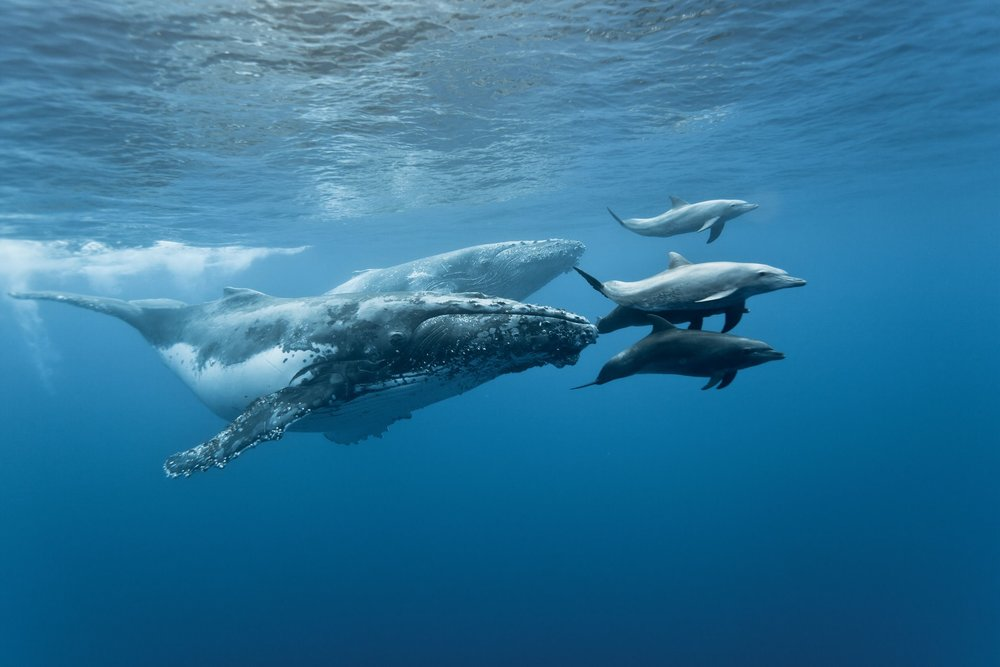 whales-and-dolphins.jpg