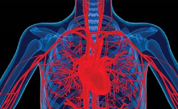 heart-related-system.jpg