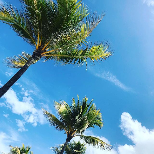 South Florida palm trees, you never get old. 🌴 ❤️ . . . . . #miamiblogger #writerslife #plungebeachhotel #lauderdalebythesea #nature #beach #floridasummer #blueskies