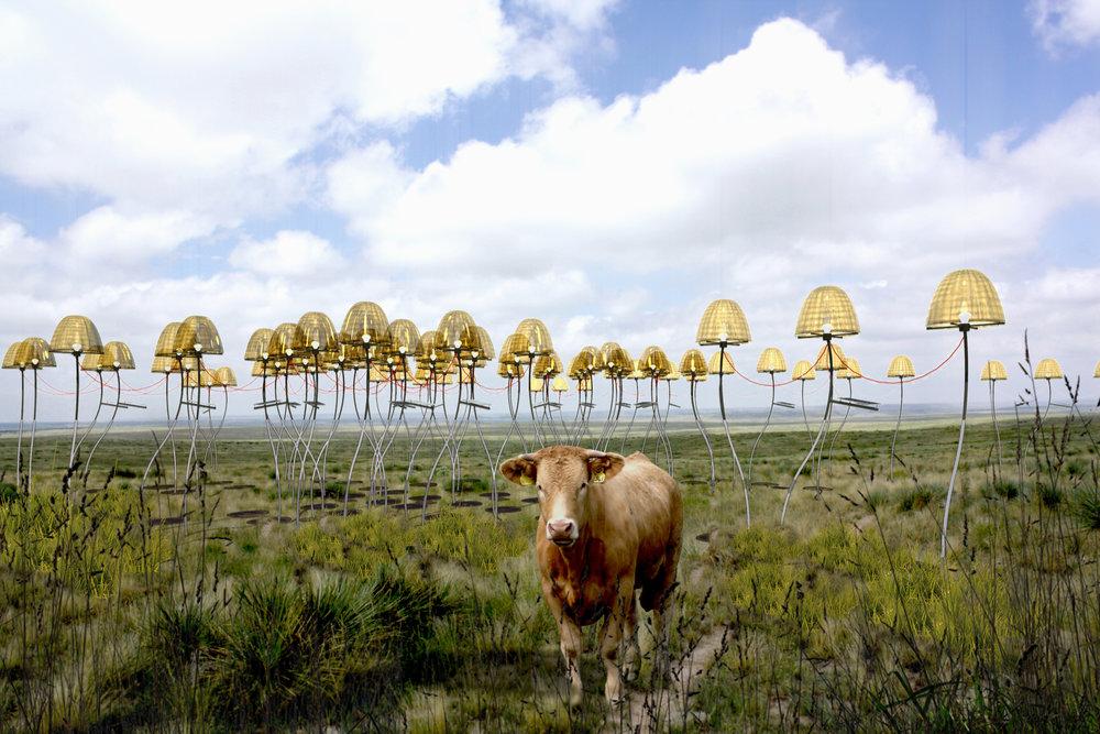 The Mushroom Field, 2019