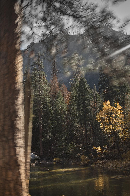 Sequoia (1 of 7).JPG