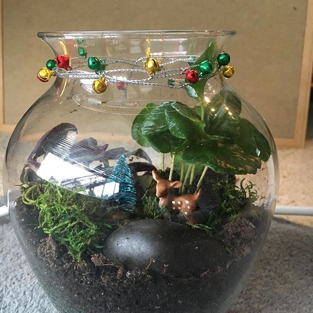 Ho ho ho! We have two Winter Terrarium Workshops coming up, on the east side (Atwood) and the west side (Middleton). Bring lush life indoors this winter with a cozy, festive winter terrarium. Decorate it with winter trees, ribbon, festive figurines, and Christmas cheer! Make one for yourself or make it as a gift!  Sign up at www.horti-craft.com.
