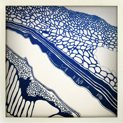 Skin Deep folio: detail of Kate Bohunnis' print