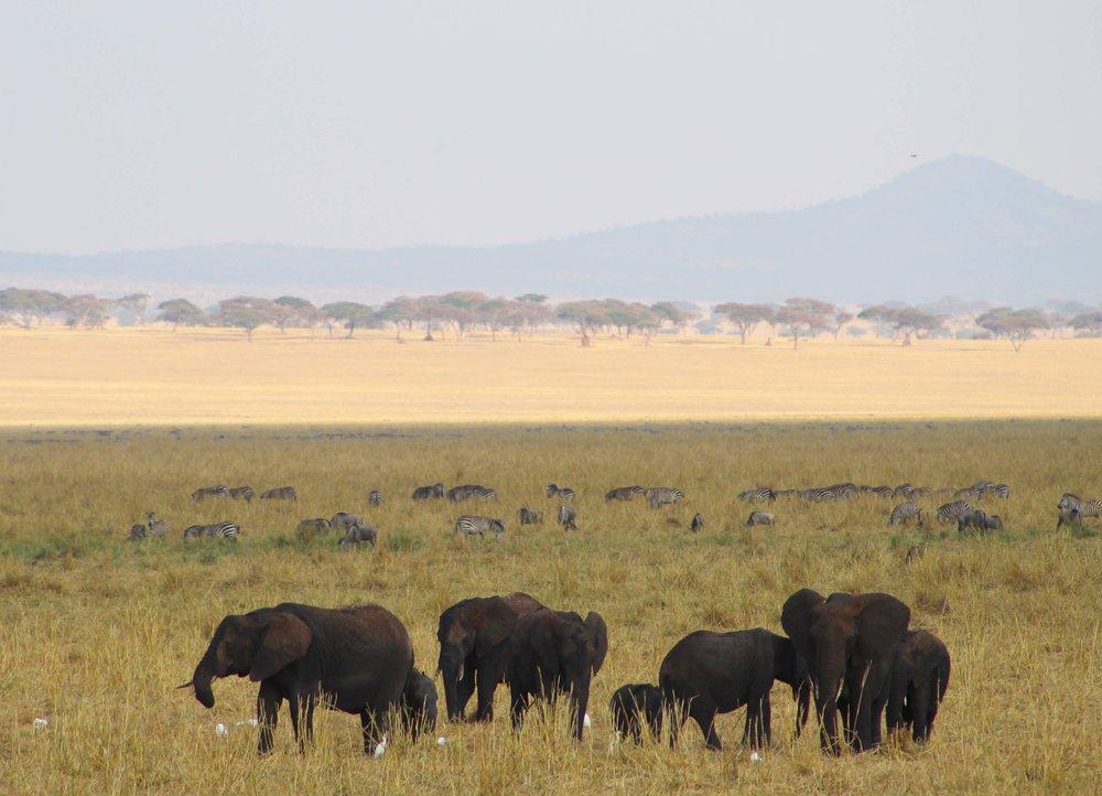 Safari in Tarangire_69.JPG