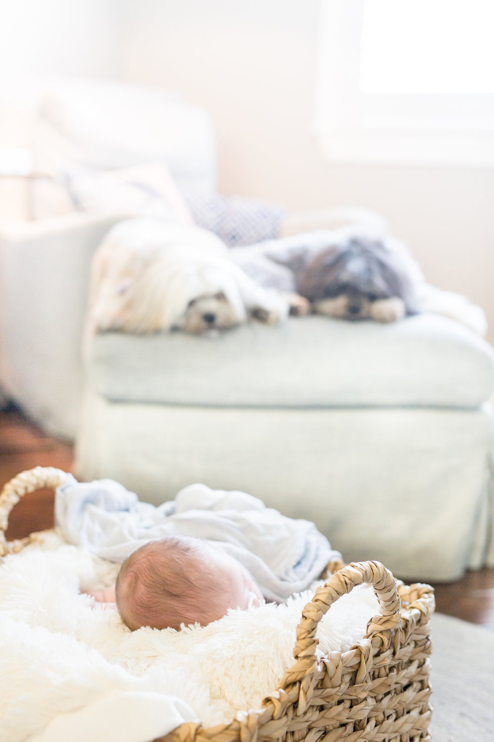 Drew Bray Newborn Session-0024.jpg