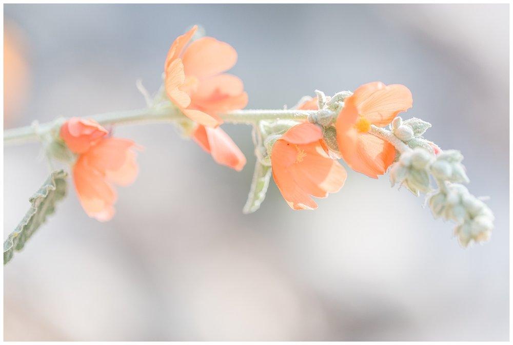Brig + Kevin - pasadena engagement - arlington gardens in spring-0054.jpg