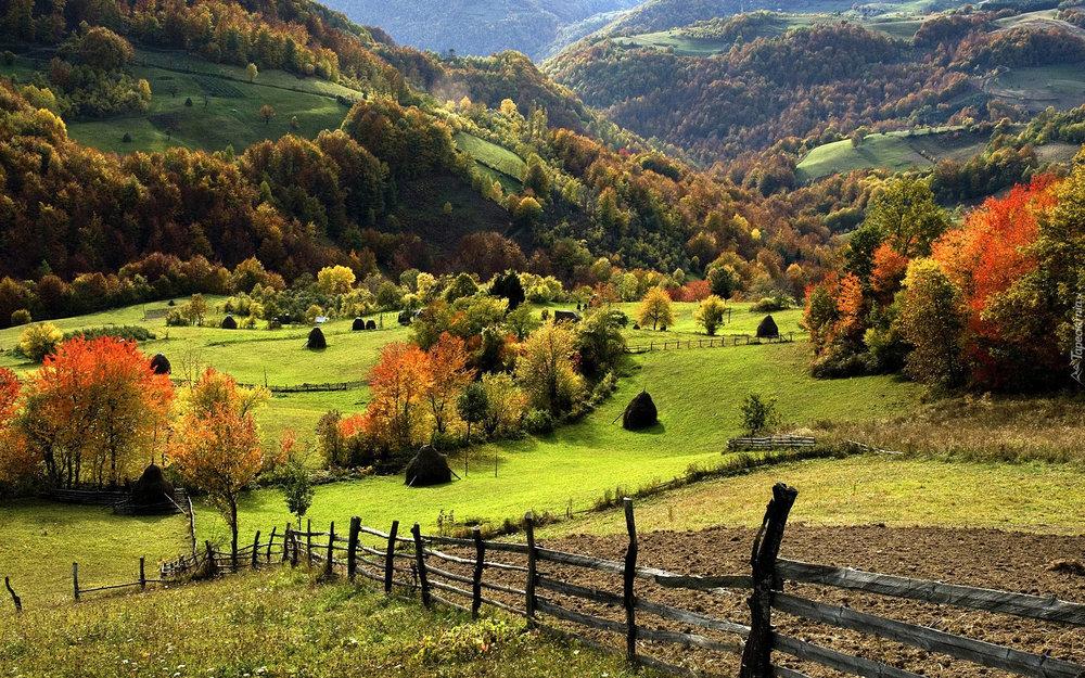 pristine_forests.jpg