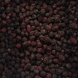 bulk_blackberry-334.jpg