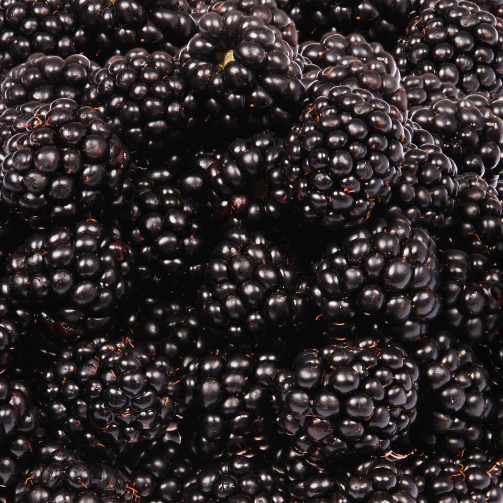 Seasons Black Berries by Riverport Trading
