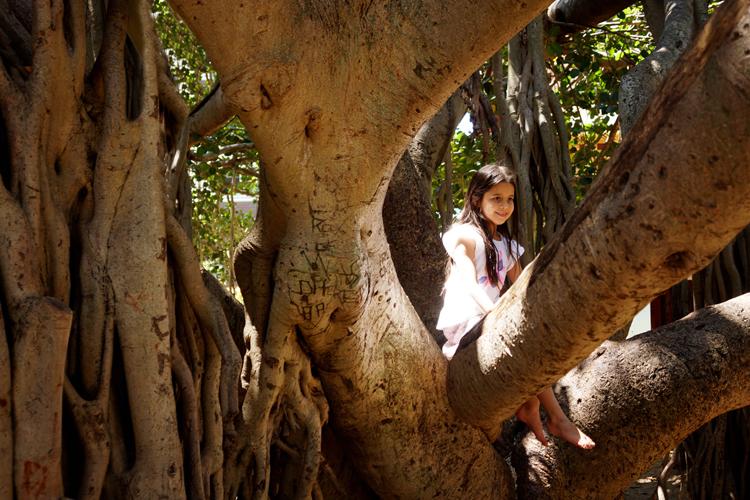 TreeClimbing2-SOOG.jpg