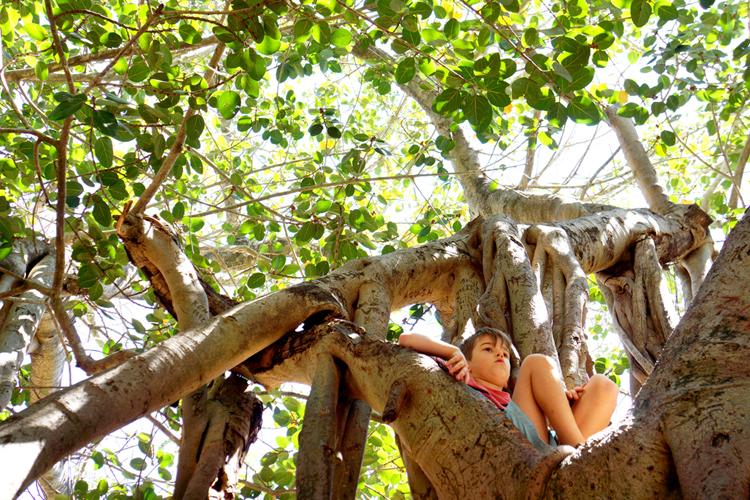 TreeClimbing-SOOG.jpg